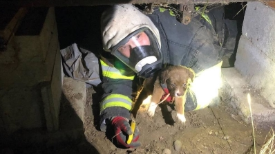 Graham Fire & Rescue Puppy Rescued